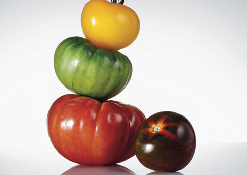 ttss_25_tomatoes_intro_h