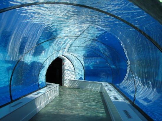 sh21-aquarium
