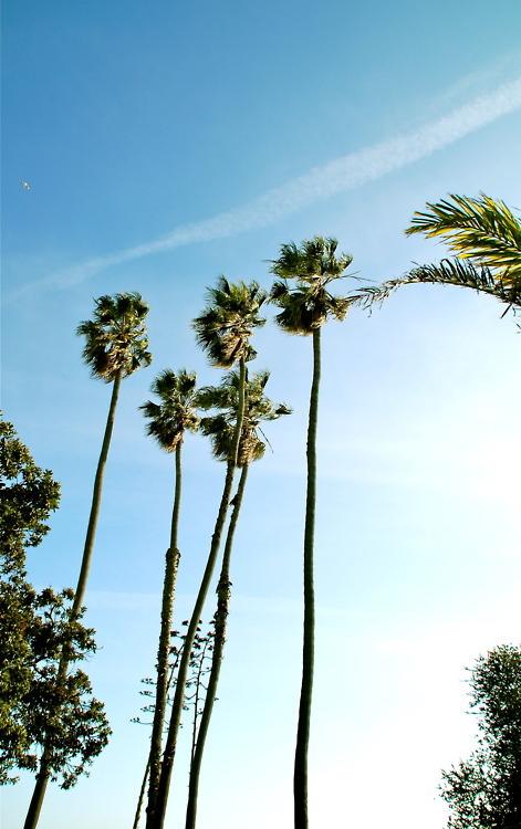 palm trees tumblr vertical. Tumblr_m9vvrl3mIq1qdoilso1_500 Tumblr_mvoqjd1PXt1qk21cfo1_1280 Snorkelers Palm Trees Tumblr Vertical